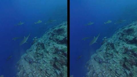 サメとダイビングする動画